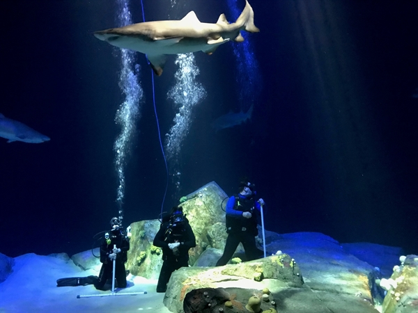 The New York Aquariums Ocean Wonders: Sharks! Opens Today