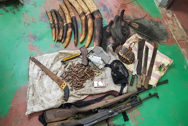 Professionalized Anti-Poaching Operations Led to Arrest and Conviction of Four Elephant Poachers in Republic of Congo