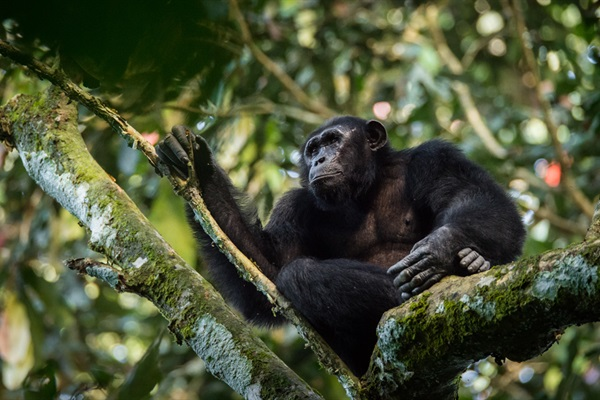 Intact Forests — Securing a Bounty the World Cannot Afford to Lose