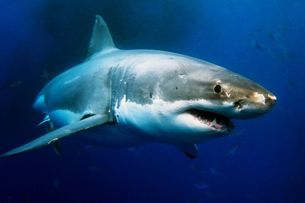 A post-Shark Week lesson about conservation off the coast of the Northeast