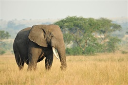 WCS Praises Hong Kong SAR for Announcing Plans to Phase Out the Local Ivory Trade