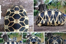 Facebook Investigation Leads to Turtle Thieves