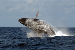 Gabon Announces Vast Marine Protected Area Network at UN Ocean Conference