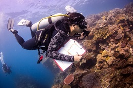 Besides Hot Water, Coral Bleaching Also About Location, Location, Location