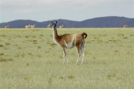 More Than 40,000 Acres of Critical Wildlife Habitat to be  Protected in the Spectacular Payunia Reserve of Argentina