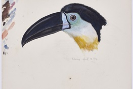WCS Releases Archive of Stunning, Forgotten Historical Wildlife Illustrations