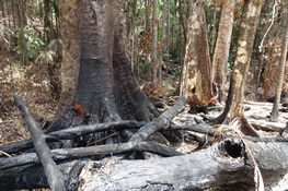 Study in Nature Ecology and Evolution Says Australia's Devastating Wildfires Were Made Worse by Logging
