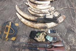 Ivory Kingpin Arrested in Mozambique