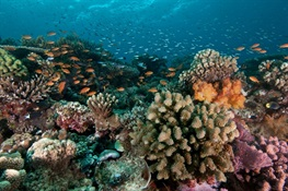 WCS Commits to Protecting Coral Reefs At Our Ocean Conference in Bali, Indonesia