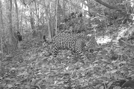 Joint Study by WCS & Yale Identifies Challenges and Opportunities to Safeguard One of Mesoamerica's Last Forest Blocks