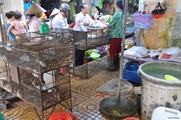 Has Vietnam banned the wildlife trade to curb the risk of future pandemics?
