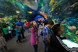 WCS New York Aquarium Named National Medal for Museum and Library Service Finalist