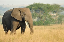Wildlife Conservation Society Hopeful for Elephants In 2018