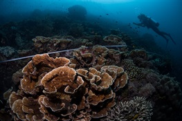 Reef Scientists Adapt Ideas From Investment World to Coral Reef Conservation