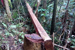 WCS Welcomes Madagascar's New Commitment to Halt Rosewood Trafficking