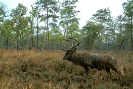 Thirty Large Mammal Species Recorded in Cambodia's Chhep Wildlife Sanctuary