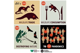 COVID-19 Infographics: Grab and Spread the Word/Available in Multiple Languages: Let's Stop Wildlife Trade, Stop Wildlife Consumption, Stop Destroying Nature and We will Stop Pandemics