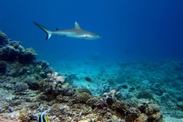 Global Study Finds Marine Reserves are Partially Effective