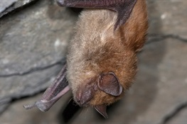 IT'S BAT WEEK! How to Make Bats Less Scary