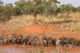 THE RUN-UP TO CITES: GREAT NEWS FOR ELEPHANTS IN NIGERIA African Protected Area Reports Zero Poaching for Last Four Years and Counting