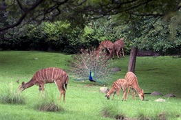Bronx Zoo's Iconic African Plains Exhibit Turns 75