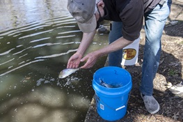 NYC PARKS, BRONX ZOO, NYSDEC & PARTNERS ADD ALEWIFE FISH TO THE BRONX RIVER