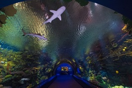 Fact Sheet:  Donald Zucker and Barbara Hrbek Zucker Ocean Wonders: Sharks!  At the New York Aquarium