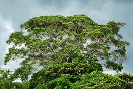 Intact Forests Are Key to Stemming and Stopping Global Climate Crisis