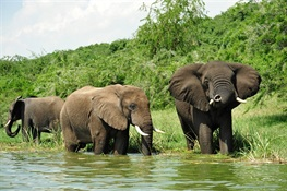 Conservationists Praise New EU Report on African Wildlife Conservation Strategy