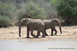 WCS Praises Vote on Ivory Bill by California Senate Committee on Natural Resources and Water