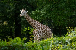WCS Applauds Introduction of New York State Law to Protect Vulnerable Species