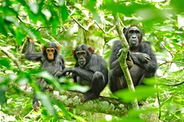 In Uganda, WCS Identifies Critical Biodiversity Sites for Conservation of Both Globally and Nationally Threatened Species