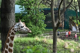 Bronx Zoo Holds 9th Annual WCS Run for the Wild