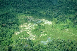 Report: Extractive Industries Impact Almost One Million Square Kilometers of Pristine Forests