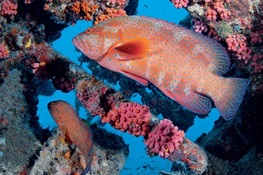 Profitable Coral Reef Fisheries Require Light Fishing