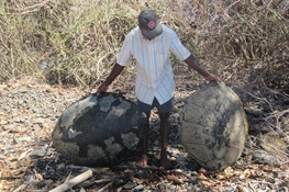 WCS Reports Organized Poaching is Decimating Madagascar's Sea Turtles