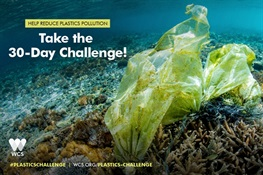 WCS Launches 30-Day Plastics Challenge on World Oceans Day