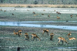 New €45 million initiative seeks to curb unsustainable wildlife hunting, conserve biodiversity and improve food security