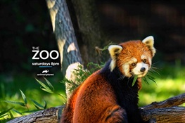 THE ZOO Moves to New Time: 8pm ET/PT on Animal Planet