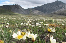 WCS: No Oil and Gas Development Should be  Allowed in the Arctic National Wildlife Refuge