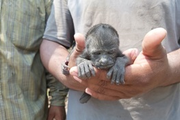Howling Planet: A Baby Howler Monkey is Rescued from Fire-Ravaged Guatemala