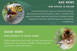 The Scoop on Coffee Farms and Birds