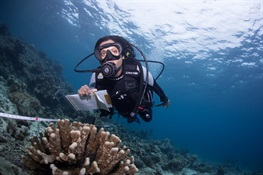 Coral Bleaching Ready for Crowdsourcing Solution