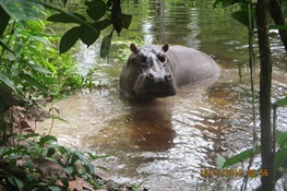 WCS Releases First Known Pics of Hippos from World Class Protected Area