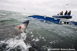 OCEARCH and the New York Aquarium Lead Shark Expedition in Long Island, NY This August