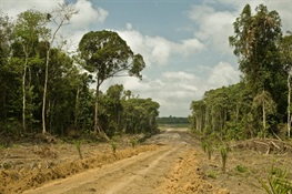 CARBON BOMB: Study in Journal Science Advances Says Climate Impact from Loss of Intact Tropical Forests Grossly Underreported