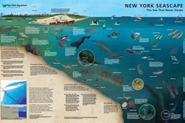 "A Different Kind of ""Sub-Way"" Map: National Geographic and WCS's New York Aquarium Produce First-of-its-Kind Underwater Map of New York"