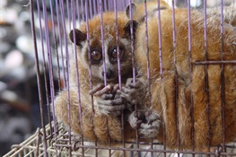 WCS Calls for Closing Live Animal Markets that Trade in Wildlife in Wake of Wuhan Coronavirus Outbreak