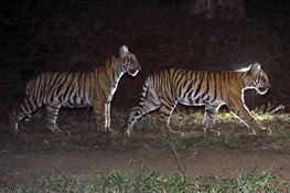 New Book Focuses on Importance on Indian Forests for Wildlife