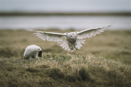 WCS Avian Conservation Work is Part of New Arctic Animal Movement Archive